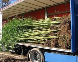 Bambous Landes Diffusion - Bénesse-Maremne - Produits et services